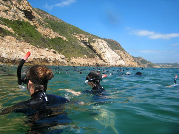 swimming with seals2